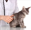 Ветеринарные клиники в Пено